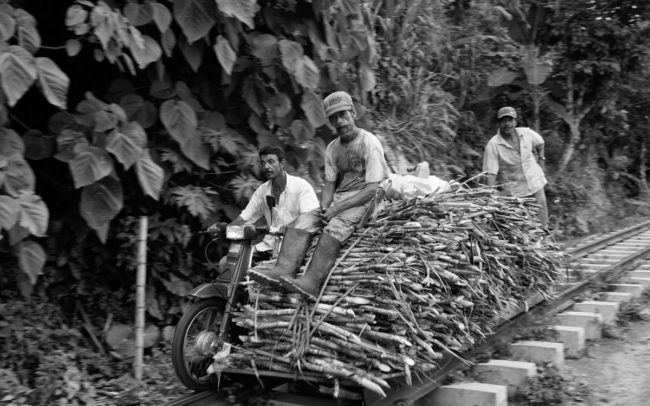 Sugar Cane Collectors, Colombia