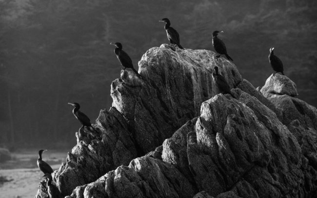 A-poem-of-birds-Isla-Negra-Chile-2011