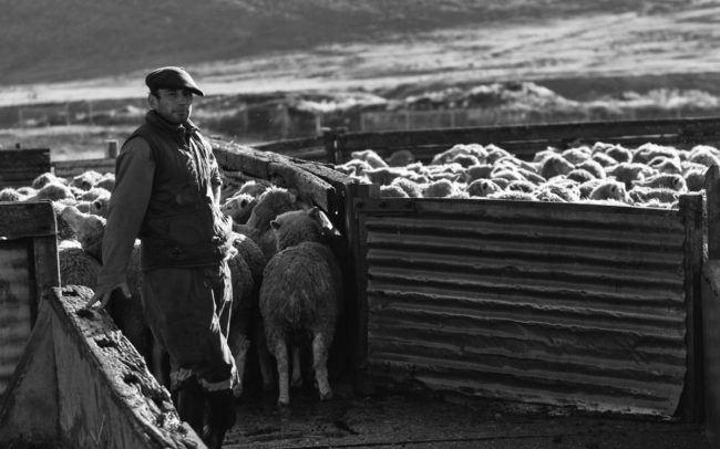 Shepherd and sheep in Cerro Castillo, Chile